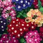 Семена цветов для балконных ящиков