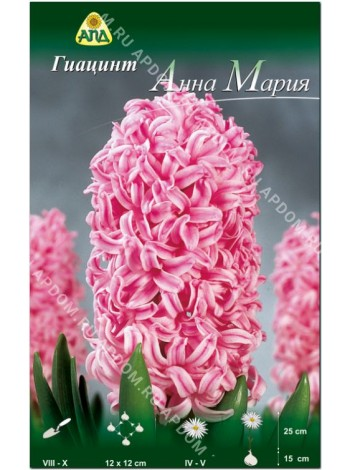 Гиацинт Анна Мария (Hyacinthus Anna Marie)