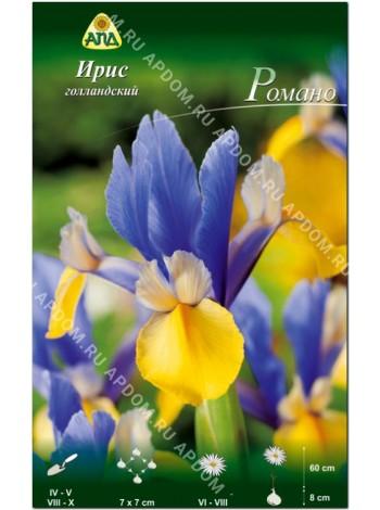Ирис голландский Романо (Iris hollandica Romano)