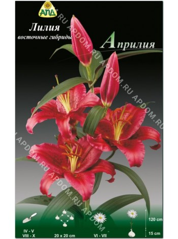 Лилия Априлия (Lilium oriental Aprilia)
