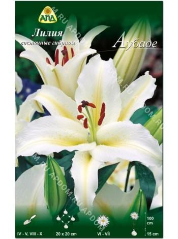 Лилия Аубаде (Lilium oriental Aubade)