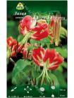 Лилия Блек Бьюти (Lilium orienpet Black Beauty)