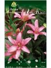 Лилия Литл Кисс (Lilium asiatic Little Kiss)