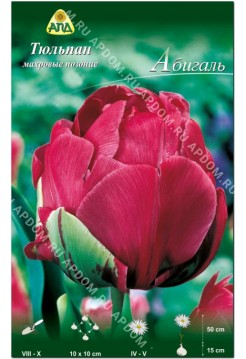 Тюльпан Абигаль
