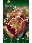 Тюльпан Американ Игл (Tulipa American Eagle)