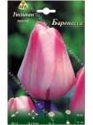 Тюльпан Баронесса (Tulipa Baronesse)