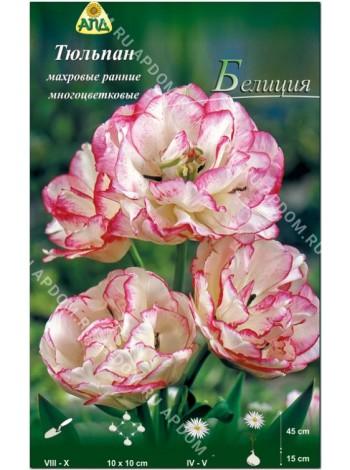 Тюльпан Белиция (Tulipa Belicia)