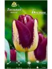 Тюльпан Бостон (Tulipa Boston)