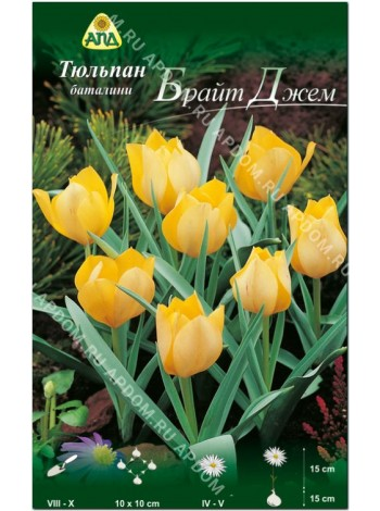 Тюльпан Брайт Джем (Tulipa batalinii Bright Gem)
