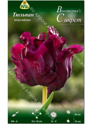 Тюльпан Виктория'с Сикрет (Tulipa Victoria's Secret)