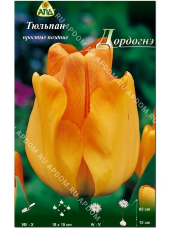 Тюльпан Дордогнэ (Tulipa Dordogne)