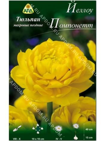 Тюльпан Йеллоу Помпонетт (Tulipa Yellow Pomponette)
