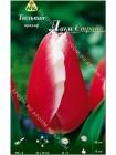 Тюльпан Лаки Страйк (Tulipa Lucky Strike)