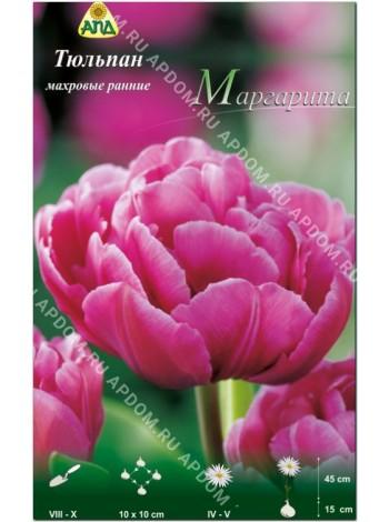 Тюльпан Маргарита (Tulipa Margarita)
