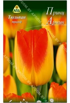 Тюльпан Принц Армин