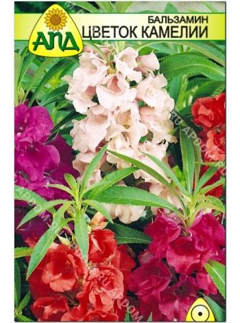 Бальзамин Цветок Камелии (Impatiens balsamina)